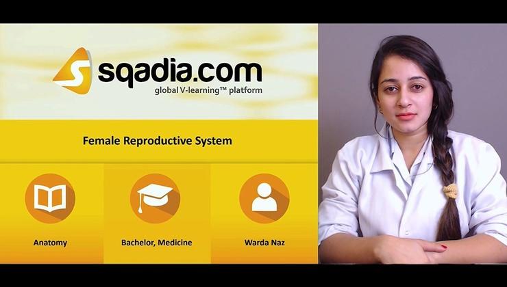 Big iwuxgyjmrsq7p0ylnbjp 171026 s0 naz warda female reproductive system intro