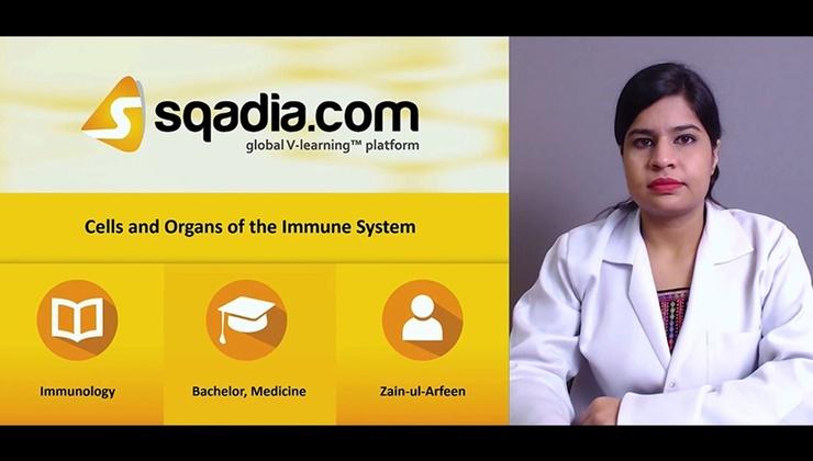 Big liow2if1tikr2kljm8og 171106 s0 arfeen zain cell and organ immune system intro